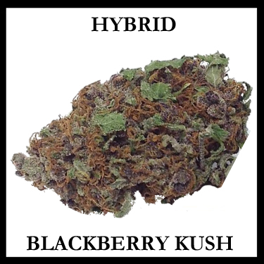 Blackberry Kush Hybrid