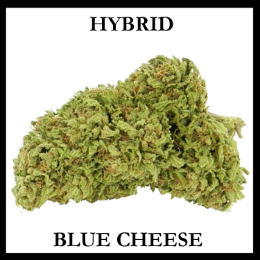 Blue Cheese Hybrid
