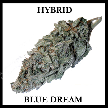 Blue Dream Hybrid