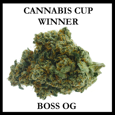 Boss OG Cup Winner