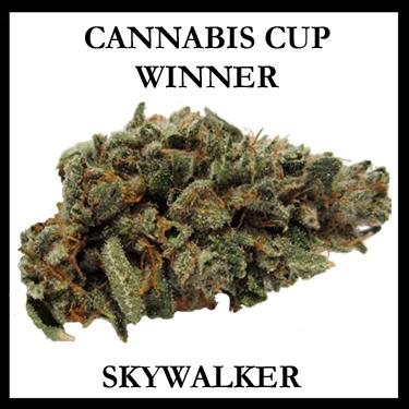 CANNABIS CUP WINNER SKYWALKER