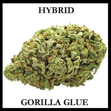 Gorilla Glue Hybrid
