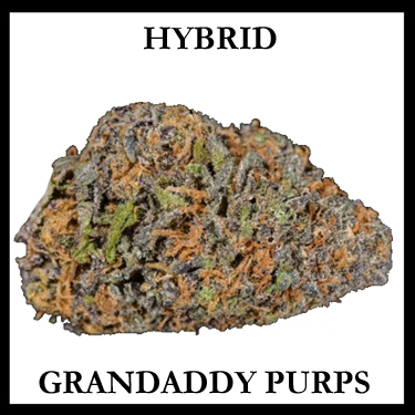 Grandaddy Purps Hybrid