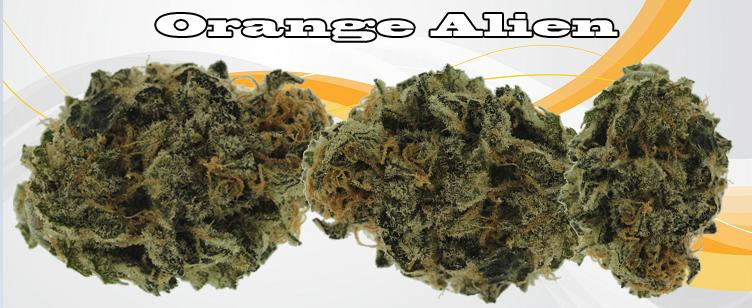 Orange Alien Banner