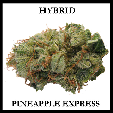 Pineapple Express Hybrid