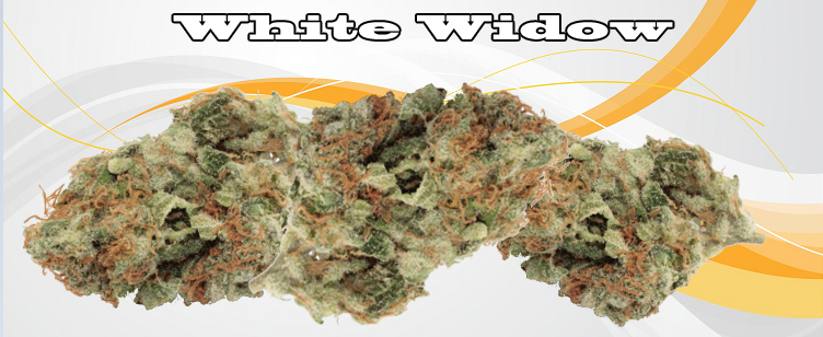 White Widow Banner