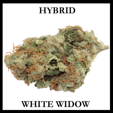 White Widow Hybrid