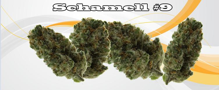 Schamell #9 Banner